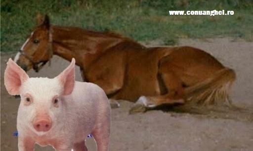 cal-si-porc